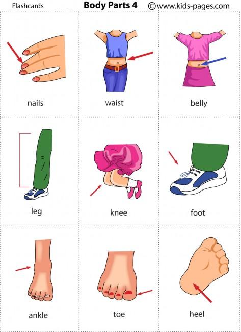 2 primaria vocabulary flashcards body parts for Fuera de aqui en ingles