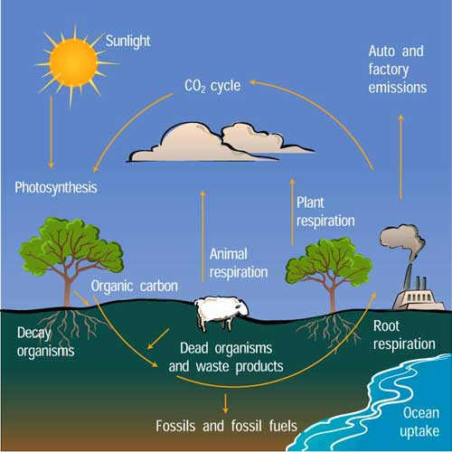 carboncycle_500